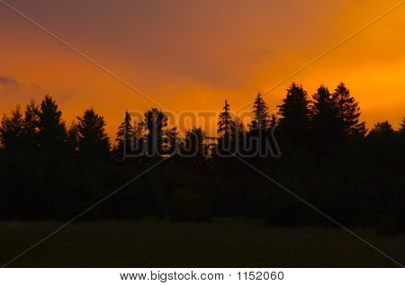 Orange Sunset With Silhouetted Treeline