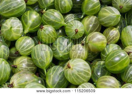 Green Gooseberry Macro