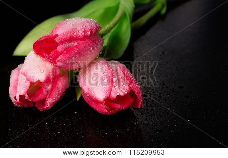 Spring flower pink tulips bouquet on black background.