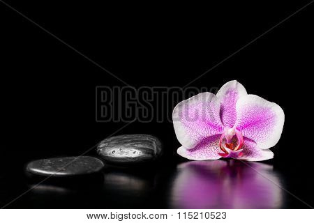 Flower pink orchid with stones on a black background