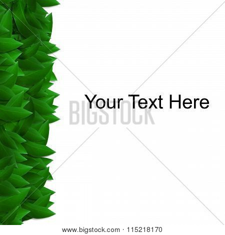 Green leaves isolated on white space for messages