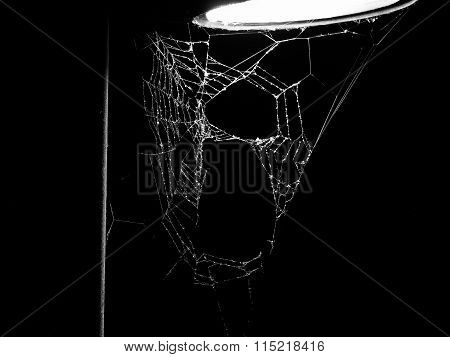 Black And White Spider Web