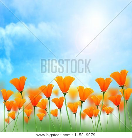 Flower orange color with sky sunshine background