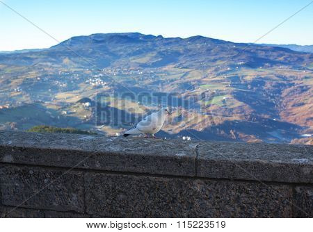 Pigeon On A Background Of Mountains.