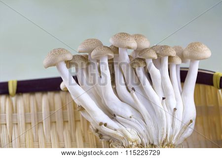 brown button mushrooms