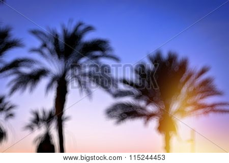 Blurred Background With Palm Tree Bokeh