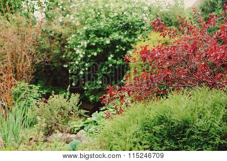 Beautiful view with coorful trees and shrubs. English garden in spring. Landscape gardening.