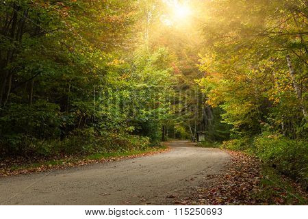country road through maple forest in autumn, canada.