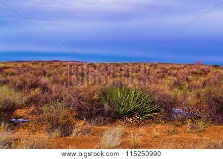 Rural Desert Sage