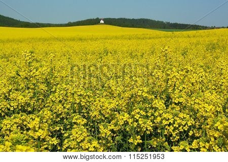 Rape field with a chapel in the background