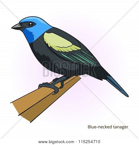 Blue necked tanager bird educational game vector