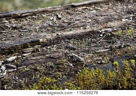 Surface Of A Felled Tree