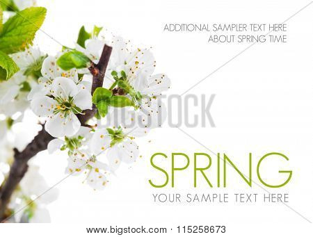Branch blooming tree with green leaves spring still life. Isolated on white background