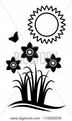 Daffodils And Sun