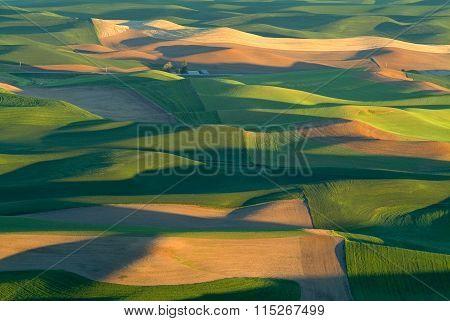 Flowing Green Grasslands