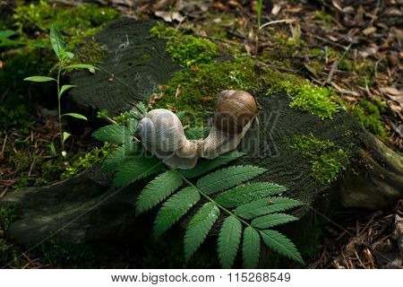 Foto Of A 2 Snails On Stump In The Wood