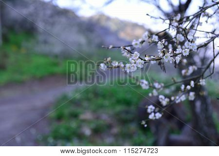 Plum blossoms bloom in the freezing winter