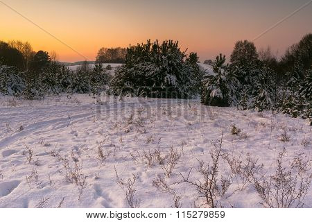 Beautiful Winter Fields And Trees Landscape