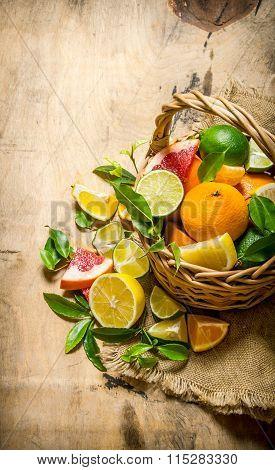 A Basket Full Of Citrus Fruits -grapefruit, Orange, Tangerine, Lemon, Lime  And Leaves.