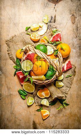 The Concept Of Citrus. Basket Of Citrus Fruits - Grapefruit, Orange, Tangerine, Lemon, Lime .