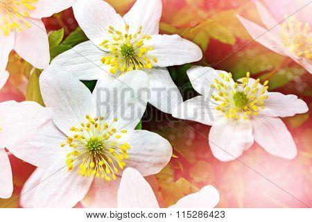 Spring Landscape. Flowers Snowdrops.