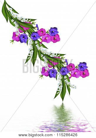 Morning Glory Isolated On White Background