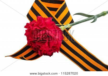 Carnation And St. George Ribbon