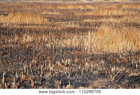 Abstract Background Burnt Grass