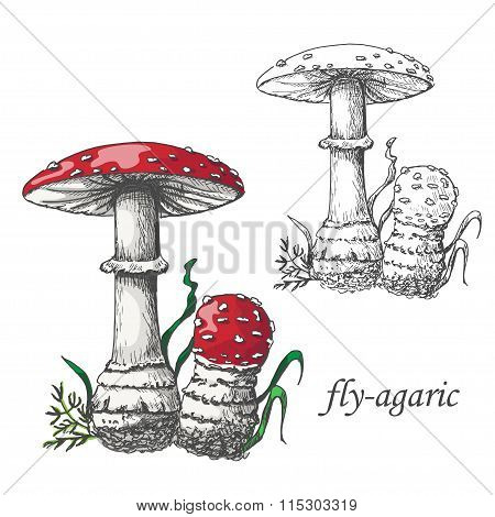 Vector illustration of a fly agaric