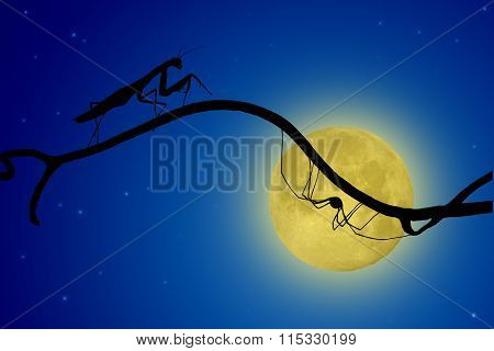 The Silhouettes Of The Praying Mantis And The Spider On Slender Twig On The Backdrop Of The Moon