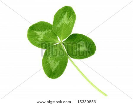 Lucky Clover With Four Leaves