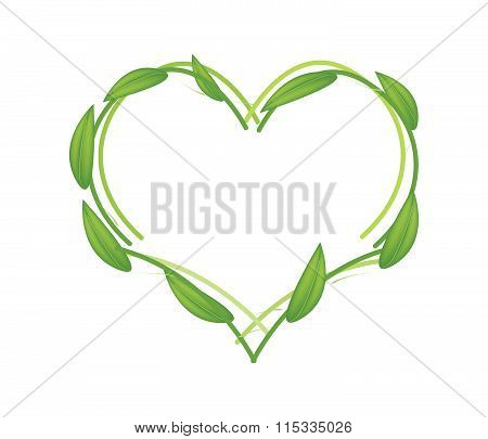 Fresh Green Leaves Forming In Heart Shape