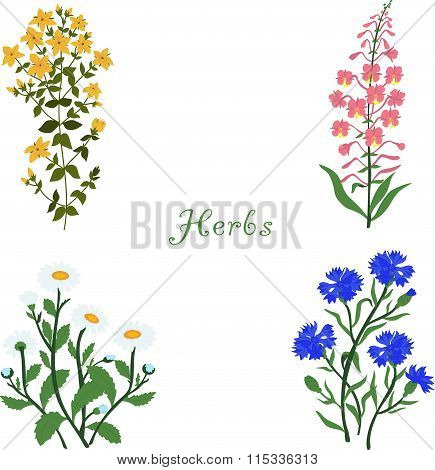 Herbs, Hypericum, Angustifolium, chamomile, cornflowers, vector illustration on a transparent backgr