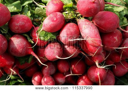 Cherry Belle Radish Or Muli