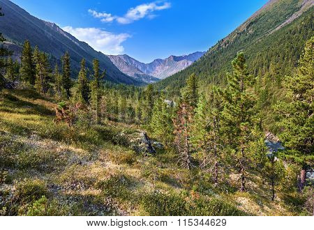 Siberian Mountain Woodlands Summer Morning