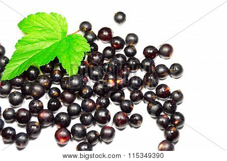 Black Currant And Green Leaf Isolated