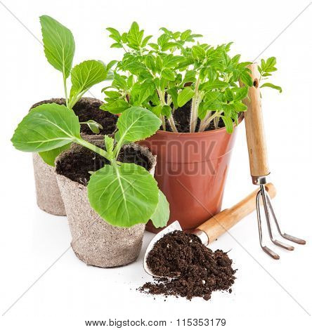 Garden tools with seedlings vegetable. Isolated on white background