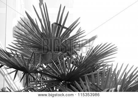 Palm tree, retro stylization, close-up