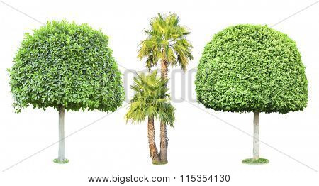 Bonsai and palm trees, isolated on white