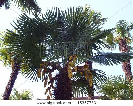 Palm composition in nature.