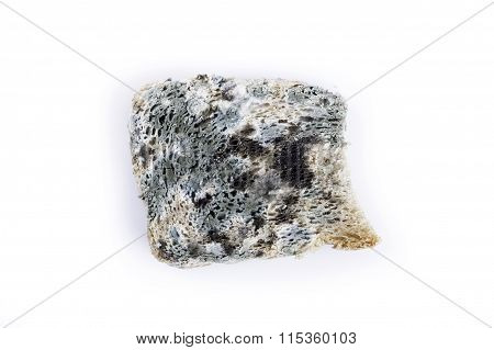 mold bread closeup isolated
