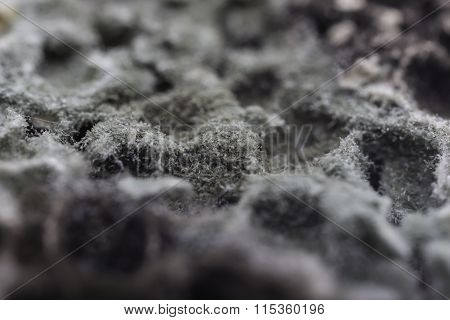 mold on bread detailed closeup