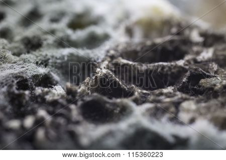 mold on bread detailed closeup macro photo