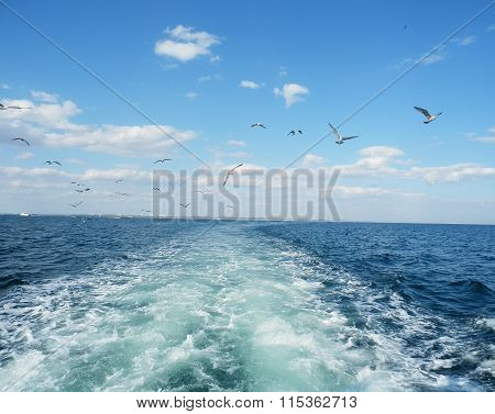 Aftertossing of a motor cruiser with sea gulls following