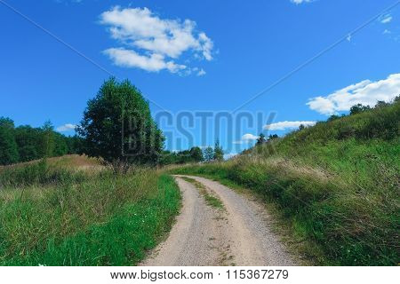 Road To Forest