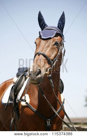 Head Shot Of A Sportive Jumping Horse