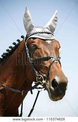 Jumping Horse With White  Headdress Ear Protection