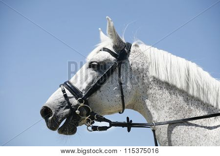 Head Of A Jumping Racing Horse