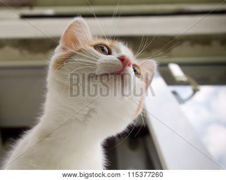 Kitten peeking out of the window to the street