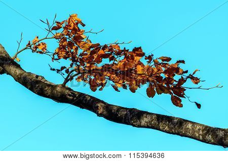 Orange Brown Leaves With Branch In Forest. Autumn Leaves Background, Photo Of Natural Background, Or